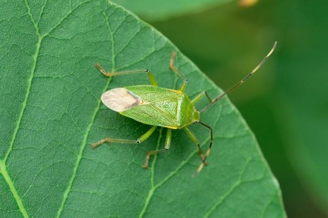 オフィスに発生する害虫はどんな種類がいるのか?その対策は?画像2