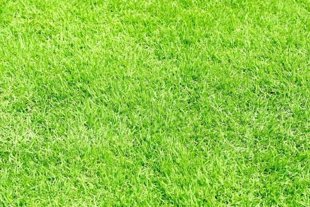 人工芝にするオフィスが増えている?施工事例とメリット・デメリット│画像3