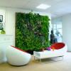 オフィスにおける観葉植物の役割
