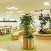 オフィスを緑化する事のメリットとは?
