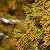 もうすぐ花粉の季節。オフィスでできる対策で、症状を少しでも軽減するには?