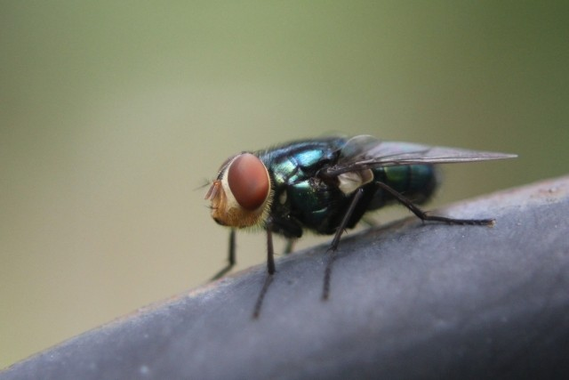 オフィスに発生する害虫はどんな種類がいるのか?その対策は?画像1