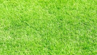 人工芝にするオフィスが増えている?施工事例とメリット・デメリット